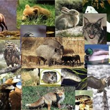 Animales Bosques de Coniferas