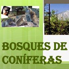 Características Bosques de Coniferas