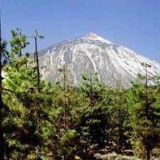Clima Bosques de Coniferas