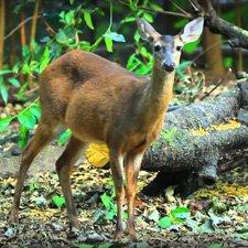 Fauna Bosques de Coniferas