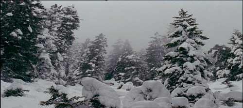 Los Bosques de Coniferas Clima