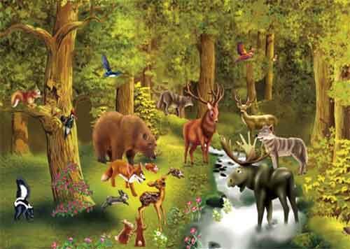 Los Bosques de Coniferas y su Fauna