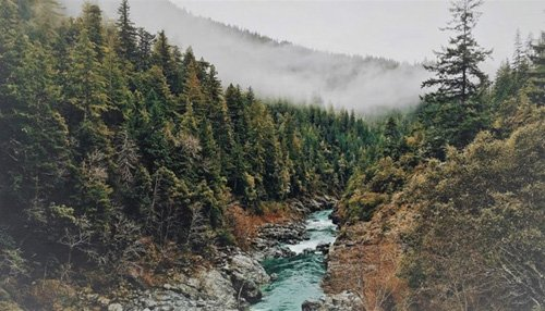 ¿ Donde encontrar los Bosques de Coníferas ?