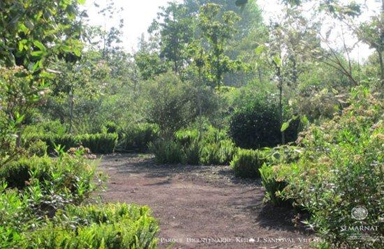 Relieves Típicos de los Bosques de Coníferas