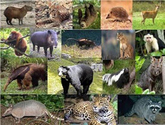 Los Animales que hay en los Bosques de Coníferas